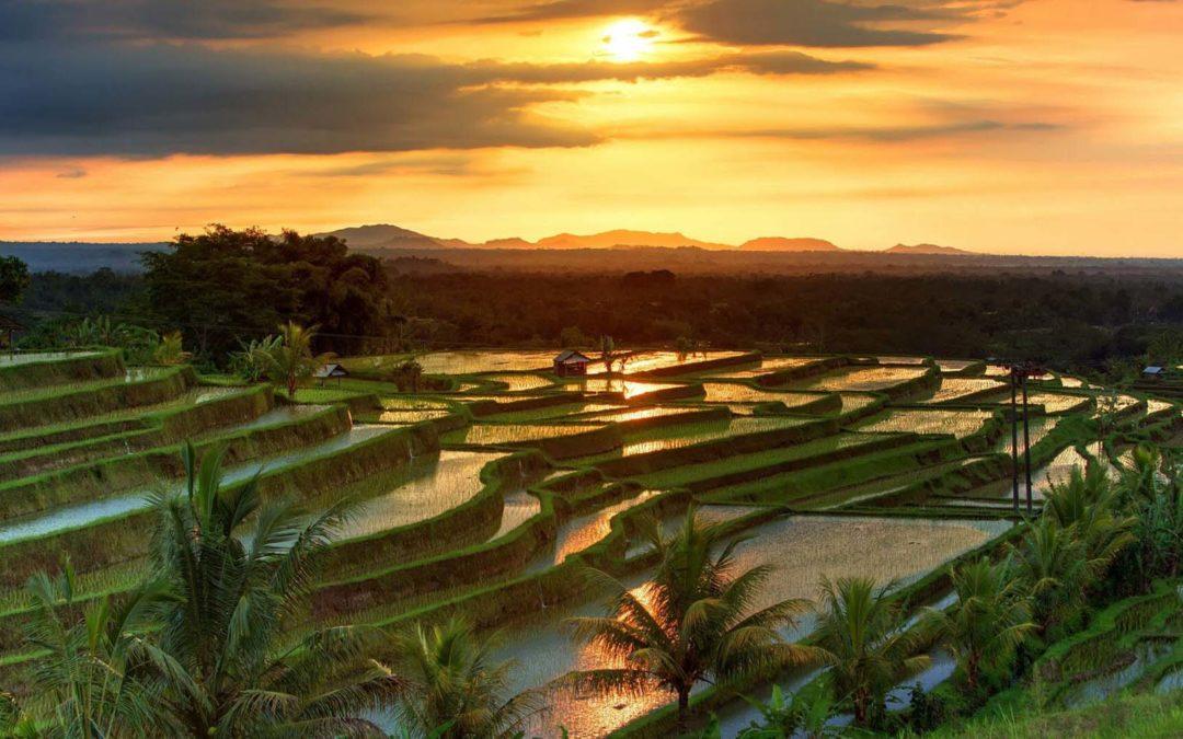 Bringing Bali & Lombok to You
