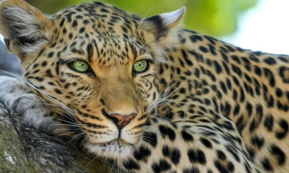 Into the wild: Exhilarating African wildlife adventures and safaris