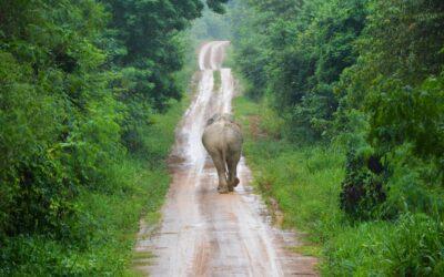 A Road Trip through Thailand with AKARYN Hotel Group